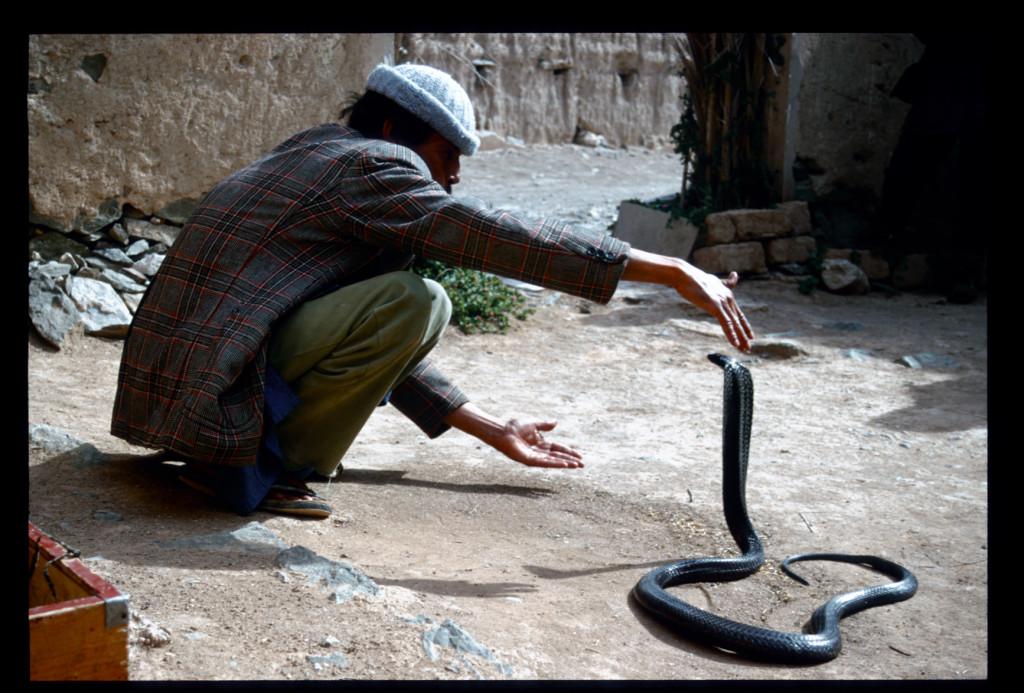 2001_Morocco Snake charmer series