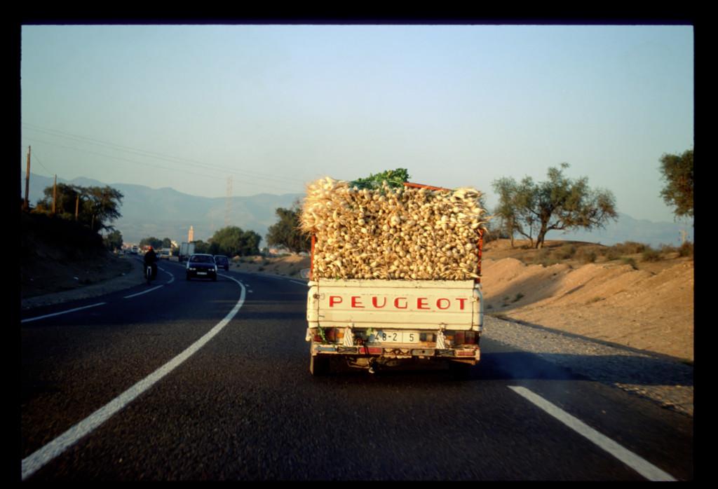 Turnips Morocco 2001